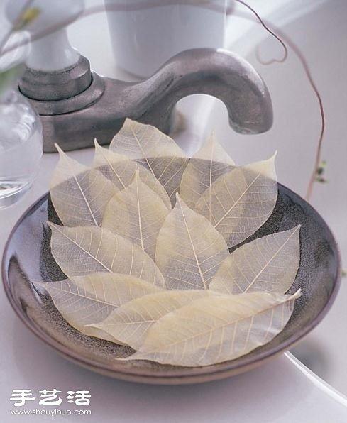宛如羽毛的樹葉標本