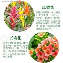 18种家里常种花草植物的正确浇水方法