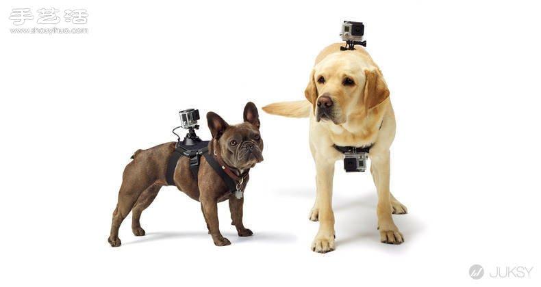 狗狗專用第一人稱GoPro攝影機專用套件!