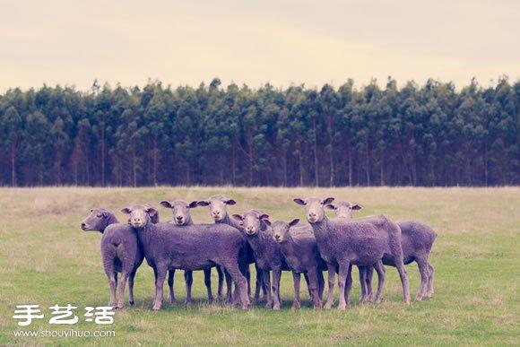奇幻彩色羊攝影 「DREAM SERIES」