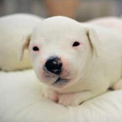 萌化人心的手工制作羊毛毡小狗狗玩偶