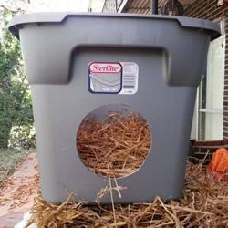 利用塑胶箱自制温暖猫窝 流浪猫不怕寒流