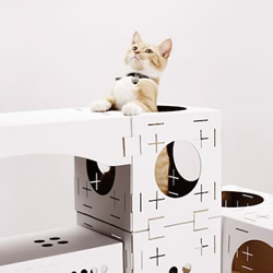 回收纸箱制成纸板 以积木概念打造幸福猫
