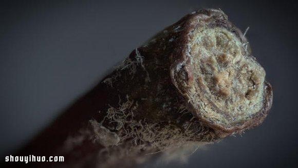 超微距攝影 發現日常小物不平凡的一面!