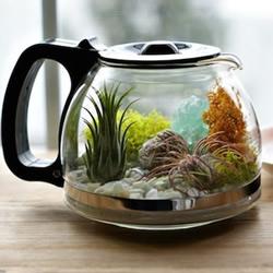 DIY盆栽设计 手工制作咖啡壶里的植物世界