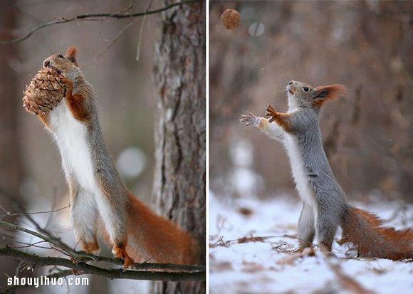 心跟着雪一起融化!可愛雪地松鼠攝影