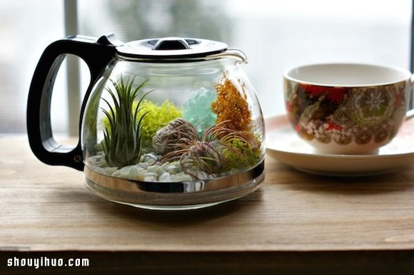 DIY盆栽設計 手工製作咖啡壺裡的植物世界