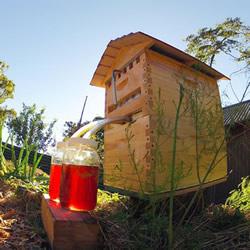 Flow Hive 方便快速的新型蜂箱设计