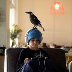 小男孩Noah与喜鹊Penguin的暖心故事