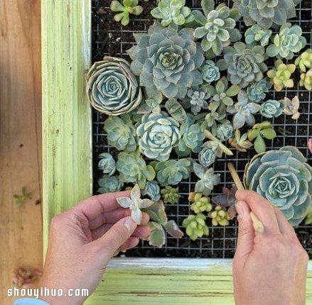 个性多肉植物装饰画DIY手工制作图解教程 -www.shouyihuo.com