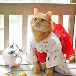 与和服解下不解之缘 超可爱的猫星人和服