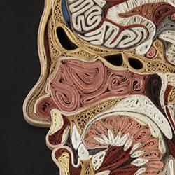 餐巾纸DIY制作栩栩如生的人体解剖图衍纸画作品