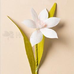 水仙花的折法图解 折纸水仙花制作方法教
