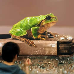 超越摄影的超现实动物画 让你重新认识绘