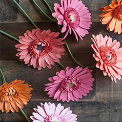 如何手工制作菊花方法 剪纸菊花制作详细步骤