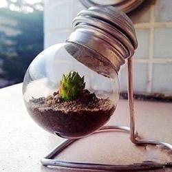 废灯泡创意DIY 制作迷你多肉植物盆景的教程