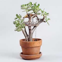 盆栽上DIY精致树屋模型 小人国般的微型建