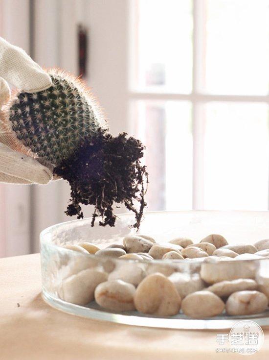 自製仙人掌盆景的方法 簡單仙人掌盆栽DIY教程