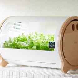 让你在家也能轻松种菜的小型室内菜圃