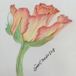 彩铅画花卉绘画教程 花朵彩铅画的画法步