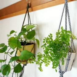 利用绳索将花盆盆栽悬挂起来的打结编织方法