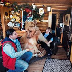 宛如童话故事情节 大熊也可以成为人类的伙伴