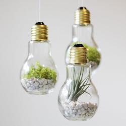 治愈系绿色盆景DIY图片 温馨家居的点睛之笔