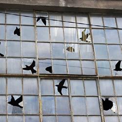 艺术家的幽默 让废弃建筑物的破窗不再可怕