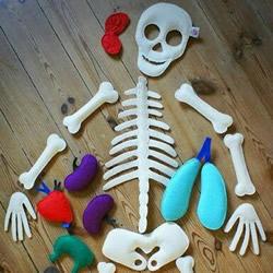 幼儿园玩教具制作:教小朋友认知身体主要器官