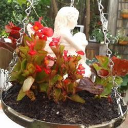 高压锅锅盖废物利用DIY制作花盆盆景的方