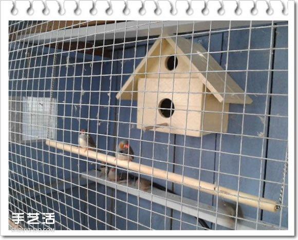 雞舍改造成鳥舍的方法 自製大空間鳥舍DIY教程