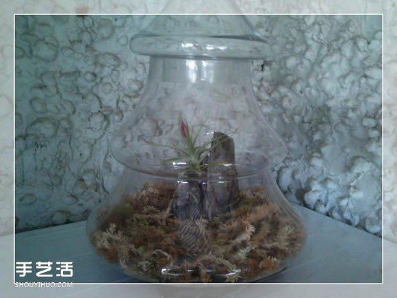 密封玻璃容器盆景DIY 幾乎不要澆水和施肥