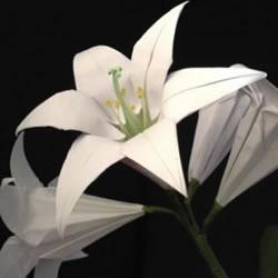 纸百合花的折法图解 折百合花的方法步骤