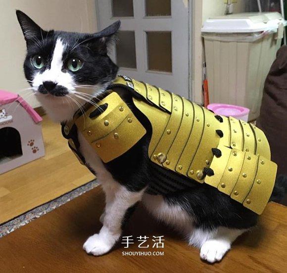 宠物用武士盔甲 让蠢萌猫狗化身帅气武士大人 -  www.shouyihuo.com