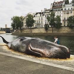 """震撼的装置艺术!抹香鲸""""搁浅""""塞纳河畔"""