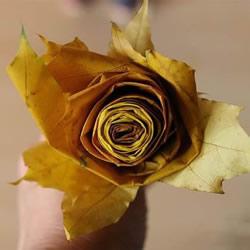 枫叶怎么做玫瑰花教程 简单枫叶玫瑰DI