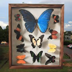 巨型墙壁涂鸦 整幢公寓墙壁都变成了蝴蝶标本
