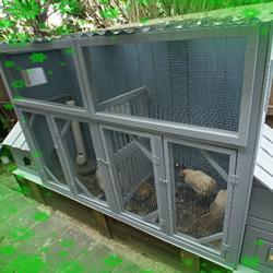 简易鸡舍的建造方法 自制鸡舍的教程图解