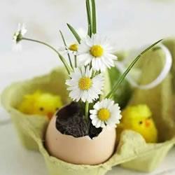 鸡蛋壳怎么做花盆图片 带来插花般的艺术美感