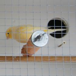 旧书柜改造鸟柜的过程 自制木头鸟柜的方法