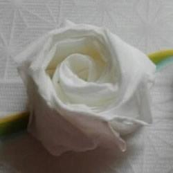一张餐巾纸折玫瑰花 只需几分钟就可以搞
