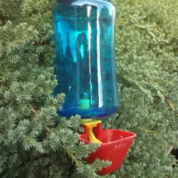 自制养鸡饮水器的方法 简易宠物饮水器的制作