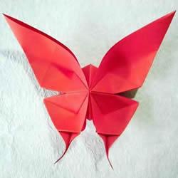 体型最大的蝴蝶 美丽凤尾蝶的折纸方法图