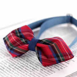 DIY英伦风领结的方法 简洁利索的男士装饰品