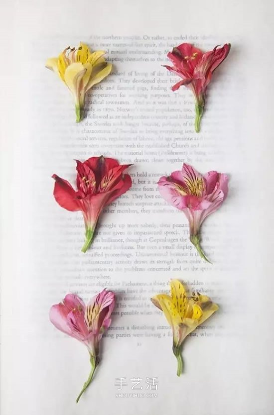 用押花留住春天的美!乾花做法及押花裝飾畫DIY