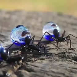 逼真到极致的昆虫玻璃雕塑 按照一比一还原!