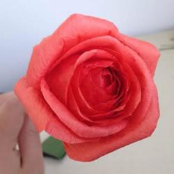 纸藤玫瑰花手工制作 用皱纹纸也同样可以做