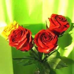 怎么折酒杯玫瑰的过程 详细酒杯玫瑰折纸实拍