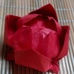 即将完全开花的荷花的折纸方法图解过程