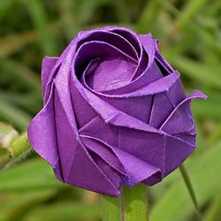 五瓣川崎玫瑰花的折纸图解 步骤讲解很详细!